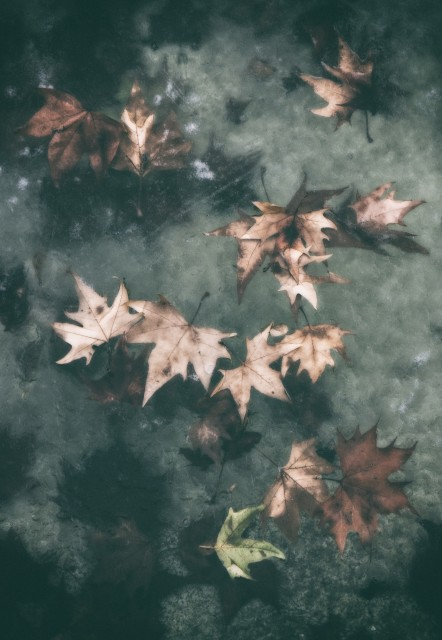 Freezed Autumn - Limited Edition